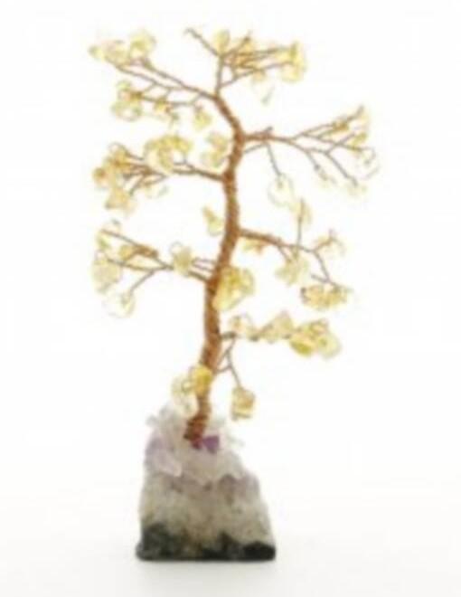 alberino-citr